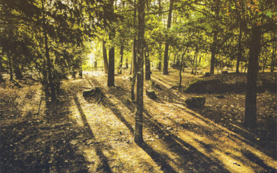 Avessadas. Quatro modos de regar um jardim, que pode ser o da alma
